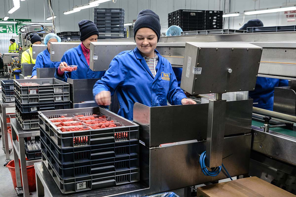 A female The Summer Berry Company employee packing raspberries in the Heathlands Farm packhouse